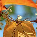 Fall Jewels by Becca Brann
