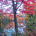 Fall Lagoon by Diane Moore
