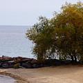 Fall Lake Tree by Brooke Bowdren