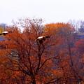 Fall Landing by Eric Wait