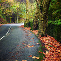Fall Landscape by Carlos Caetano