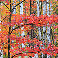 Fall Layers by Adam Pender