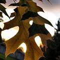 Fall Leaf by Amber Carpenter