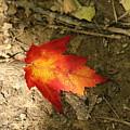 Fall Leaf  by Christina McNee-Geiger