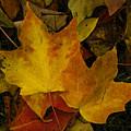 Fall Leaf Litter by Robert Ullmann
