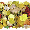 Fall Leaf Vignette by JQ Licensing