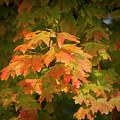 Fall Leaves 12 Autumn Leaf Colors Art by Reid Callaway