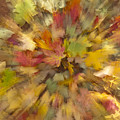 Fall Leaves Abstract by Sandra Bronstein