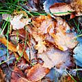 Fall Leaves by Alex Sowinski