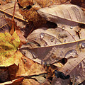 Fall Leaves And Dew 9 2017 by Mary Bedy