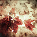 Fall Leaves by Anthony C Ellis