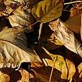 Fall Leaves by Bill Kellett