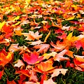 Fall Leaves by Catie Canetti