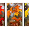 Fall Leaves by Jill Reger