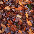 Fall Leaves by Lucio Cicuto
