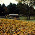 Fall Leaves - No. 2015 by Joe Finney
