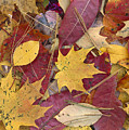 Fall Leaves On Forest Floor by Tim Fitzharris