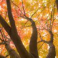 Fall Leaves by Pati Bobeck