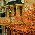 Fall Leaves  by Robert Meyerson