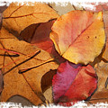 Fall Leaves by Sharon Foster