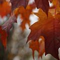 Fall by Linda Shafer