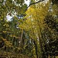 Fall Maple In Yosemite by Chris Brewington Photography LLC