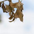 Fall by Margie Hurwich