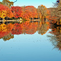 Fall Morning In East Lyme 1 by Gerald Mitchell