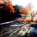 Fall Morning by Stephanie Gobler