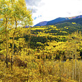Fall Mountain Scenery by Steven Parker