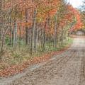 9018 - Fall On Murphy Lake Iv by Sheryl L Sutter