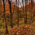 Fall On The Ice Age Trail by Dale Kauzlaric