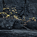 Fall On The Rocks by Royce Howland