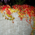 Fall On The Wall by Deborah  Crew-Johnson