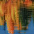 Fall Palette  by Luis A Ramirez