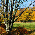 Fall Pasture by Tim Nyberg