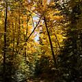 Fall Path In Golden Yellow by Georgia Mizuleva