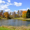 Fall Pond by Penny Neimiller