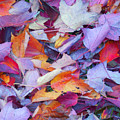 Fall Purples  by Karin  Dawn Kelshall- Best