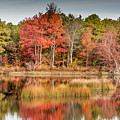 Fall Reflections by Charles Aitken