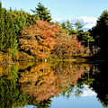 Fall Reflections by Greg Fortier