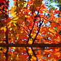Fall Reflextion by Amy Vangsgard