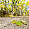 Fall Road by David M Porter