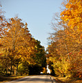 Fall Road by Tim Nyberg