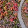 Fall Road by Wesley Aston