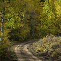 Fall Roads by Dan Kinghorn