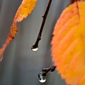 Fall by Robin White