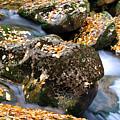 Fall Rushing Mountain Stream by Thomas R Fletcher