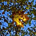 Fall by Sara Stevenson