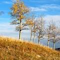 Fall Sentinels by Ann E Robson
